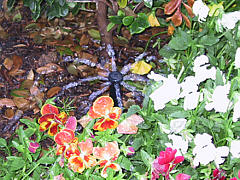 Irrigation Project - Residential Flower Bed Sprinklers