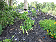 Landscaping Project - Mulch Bed with Foliage